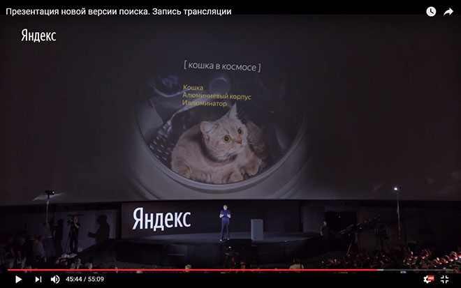 кошка в космосе