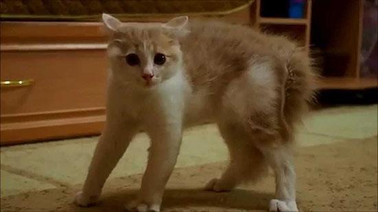напуганный кот-клиент